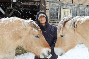 Bernice Ende with her Norwegian Fjord horses Essie Pearl (left) and Montana Spirit in the Fort Edward corral where they will rest for the winter before completing a journey across North America.  Chronicle photo/Gordon Woodworth