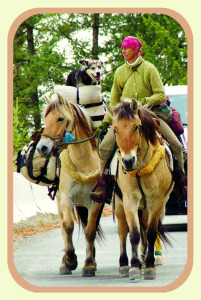 "Bernice Ende on the road with her horses and her dog, Claire. Bernice said of the dog, ""after 17,000 miles, she has retired."" Photo provided"